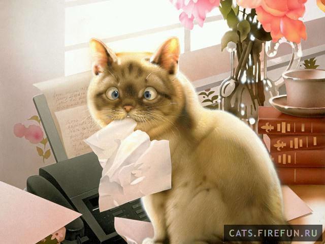 02157-makoto_muramatsu_3-cats.firefun.ru[1]